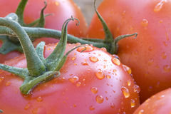 Tomatoes On A Vine. Stock Photos
