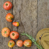 Tomatoes organic cultivation Royalty Free Stock Image