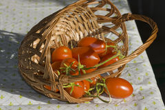 Tomatoes in overturned basket. Basket of freshly picked tomatoes on the table Stock Photo