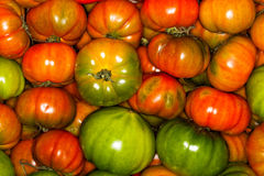 Tomatoes ox heart background. A background made up of many fresh tomatoes. intense colors, green, orange, red, yellow with different shades. Photo taken with a Stock Image