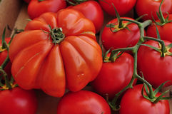 Tomatoes. Bought from farmers market in Provence Royalty Free Stock Photos