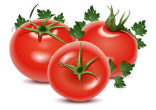Tomatoes and parsley. Vector illustration of three tomatoes and parsley  on a white background Royalty Free Stock Photography