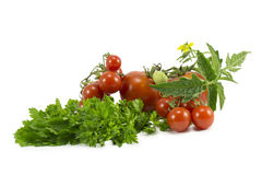 Tomatoes, parsley Royalty Free Stock Image