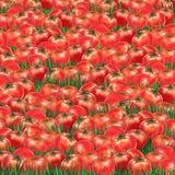 Tomatoes pattern Stock Photography