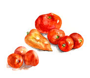 Tomatoes and pepper, watercolor, realism. Tomatoes and pepper. Hand drawn illustration. Watercolor Royalty Free Stock Image