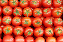 Tomatoes. Perfect lines of tomatoes on the market Stock Images
