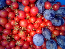 Tomatoes and plums. Cherry red tomatoes with blue blums Stock Photo