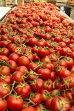 Tomatoes Provence street market Royalty Free Stock Photography