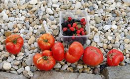 Tomatoes. raspberries Stock Photo