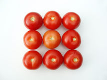 Tomatoes in a rectangle form royalty free stock photography