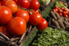 Tomatoes. Red tomatoes in the brown basket on sunny day Royalty Free Stock Images