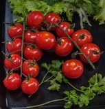 Tomatoes red fist carpal on a black platter with sprigs of green parsley and salad Royalty Free Stock Photography