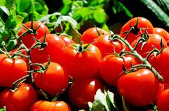 Tomatoes, Red, Food, Frisch, Market Royalty Free Stock Photography