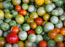 Tomatoes Red and green Royalty Free Stock Photo