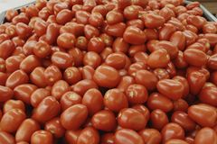 Tomatoes red. Red tomatoes in a large bunch Stock Photography