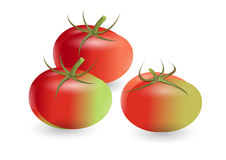 Tomatoes ,red mix green tomatoes on white background,vector illustration Royalty Free Stock Image