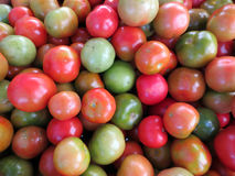 Tomatoes of Red, orange, and green color Stock Images