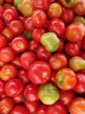 Tomatoes of Red, orange, and green color for sale at farmers mar Royalty Free Stock Image