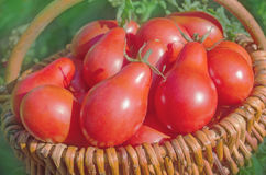 Tomatoes red  pear shaped in a basket Stock Photos