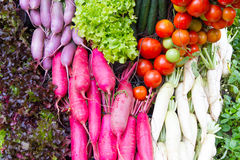 Tomatoes , red radish and vegetable Royalty Free Stock Photos