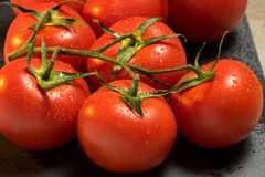 Tomatoes. Red ripe wet whole tomatoes Stock Image