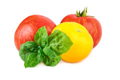 Tomatoes red and yellow with basil leaf Royalty Free Stock Photography