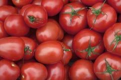 Tomatoes. Royalty Free Stock Photos