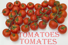 Tomatoes. Ripe tomatoes on white background, tomatoes in Spanish and English Royalty Free Stock Photo