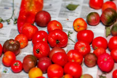 Tomatoes ripen on newspaper Royalty Free Stock Images