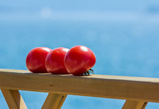 Tomatoes ripening in the sun Stock Images