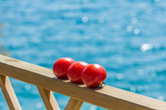 Tomatoes ripening in the sunshine Royalty Free Stock Photo