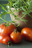 Tomatoes and rosemary. Stock Photography
