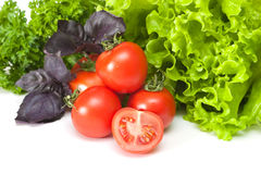 Tomatoes with salad. And basil on a white background Stock Images