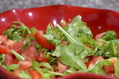 Tomatoes salad with arugula Royalty Free Stock Images