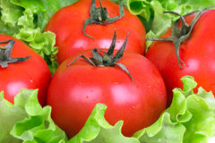 Tomatoes on salad leafs Royalty Free Stock Photography