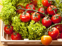 Tomatoes and salad in wooden basket. Tomatoes and salad in  wooden basket on the table Stock Photo