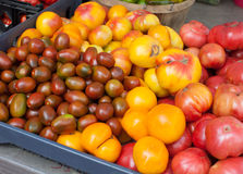 Tomatoes are for sale at the farmers market Royalty Free Stock Image