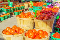 Tomatoes on sale in the Jean-Talon Market Market, Montreal royalty free stock photography