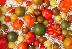 Tomatoes in sawdust. Set of various ripe tomatoes with sawdust stock image