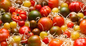 Tomatoes with sawdust. Set of various ripe tomatoes with sawdust Royalty Free Stock Image