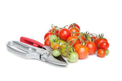 Tomatoes and Secateurs. Some freshly harvested tomatoes and a pair of secateurs stock image