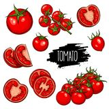 Tomatoes set collection Royalty Free Stock Images