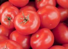 Tomatoes set eight Stock Photos