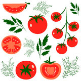 Tomatoes. Set of fresh healthy red tomatoes made in flat style. Great for Stock Photos