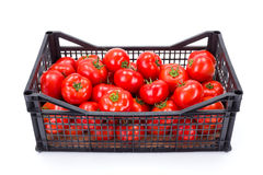 Tomatoes (Solanum lycopersicum) in plastic crate. Fresh ripe tomatoes (Solanum lycopersicum) in plastic crate royalty free stock photography