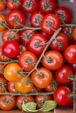 Tomatoes Royalty Free Stock Photos