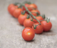 Tomatoes. Some small cherry tomatoes on the vine stock photography