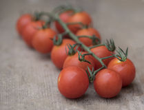 Tomatoes. Some small cherry tomatoes on the vine stock images