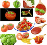 Tomatoes and spices collage Royalty Free Stock Image