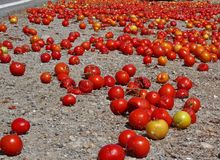 Tomatoes spilled in the road. Bright red tomatoes spilled in the road Royalty Free Stock Photos